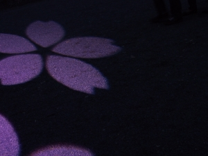 There was a number of flower light projections all down the path.